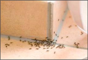 Stop ants before they invade